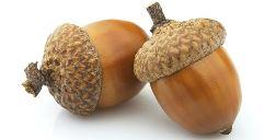 acorn-wide